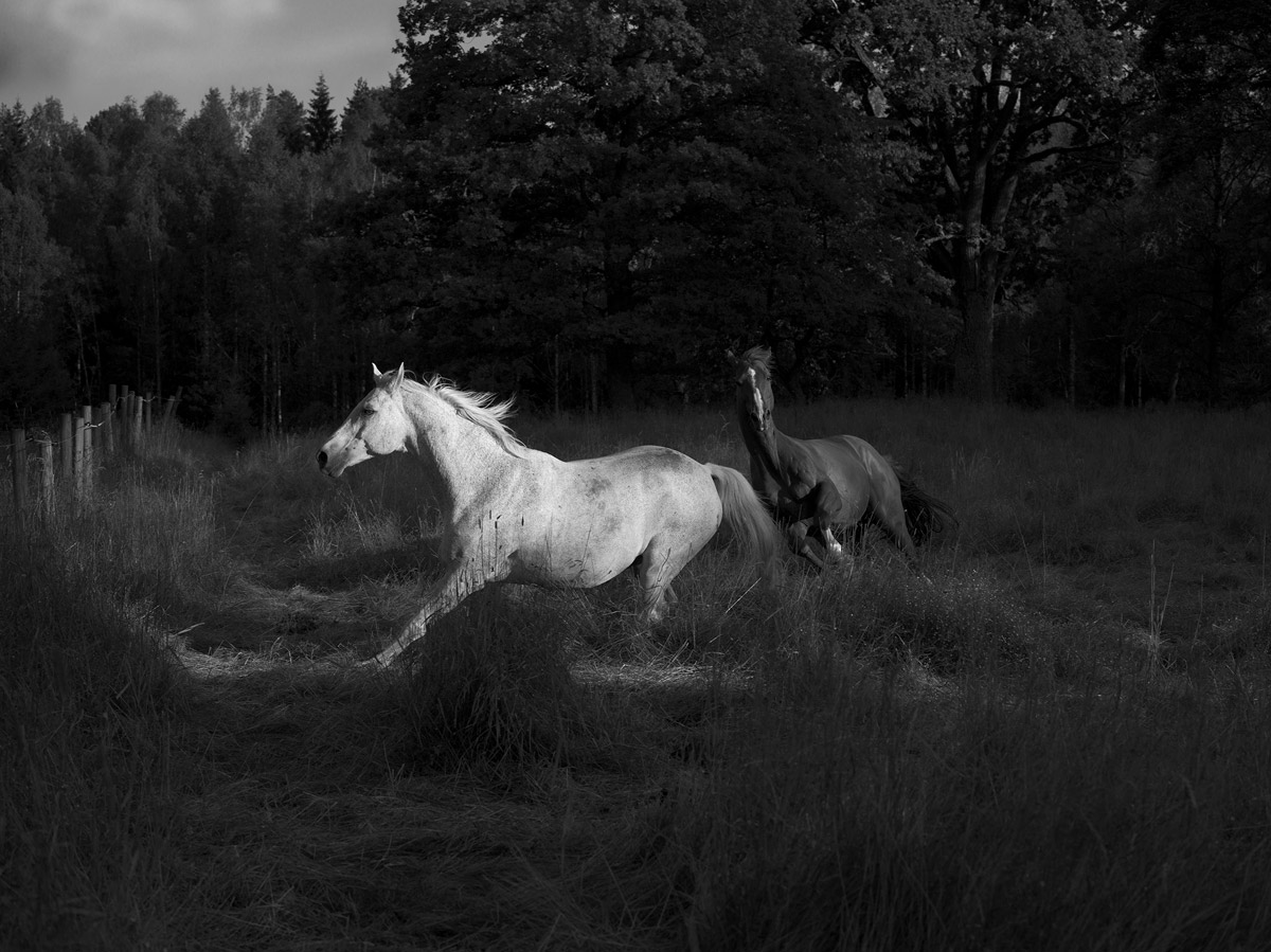 glorious anja niemi the rider meadow at dusk horse